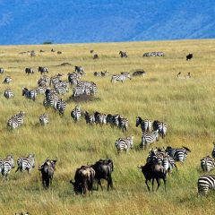 Tanzania's Incredible Wildlife Watching Options