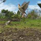Hawaii's Wonderful Bird Watching Scene