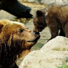 Incredible Alaska Wildlife Watching Destinations