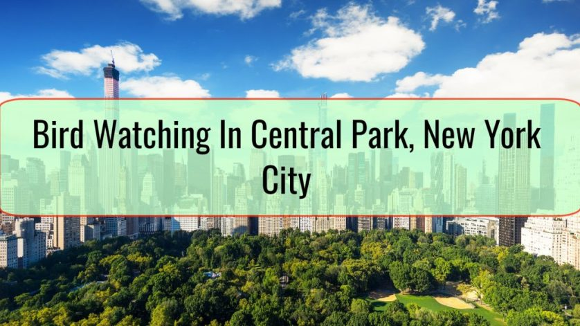 Bird Watching In Central Park, New York City