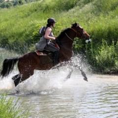 Horse Riding Trips in Croatia