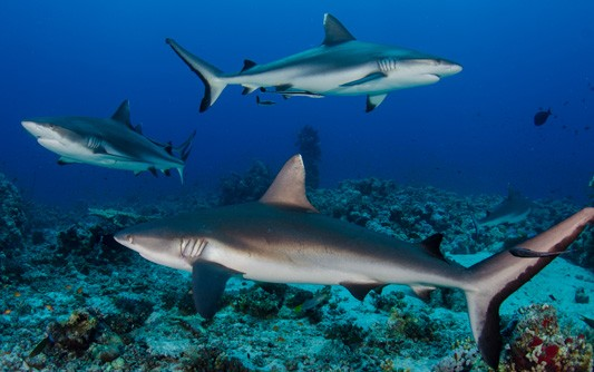 Best Scuba DIving Sites To Consider In The Red Sea