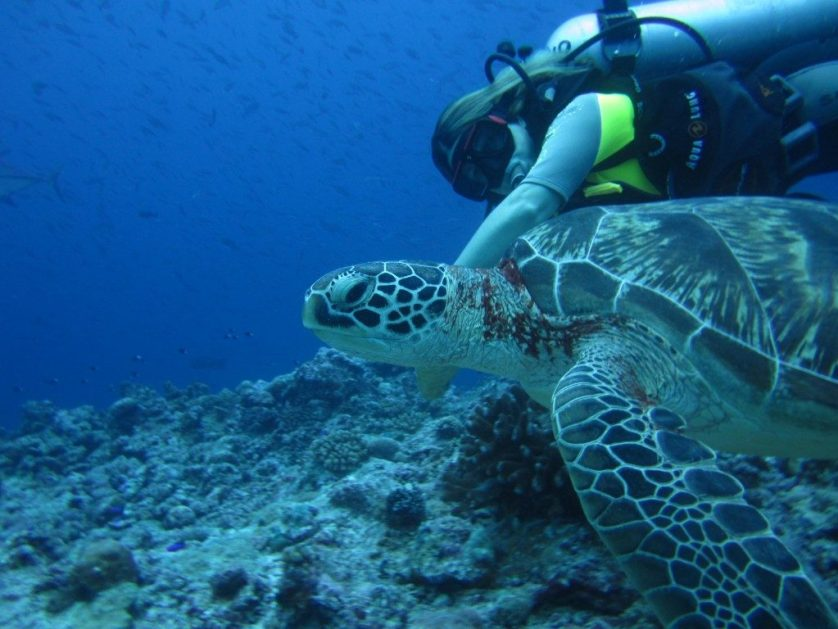 palau scuba diving with turtle