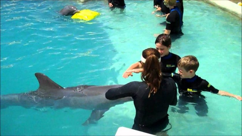 swimming with dolphins honolulu