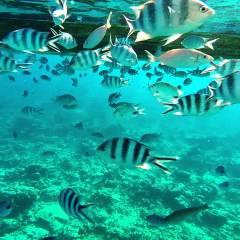 Mauritius' Wonderful Snorkeling Beaches