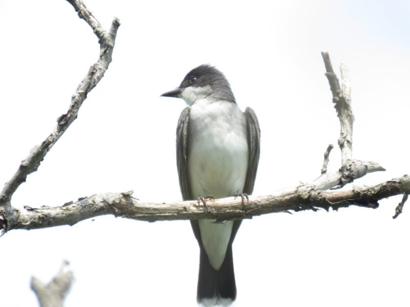 Birding At The Niagara River, Canada
