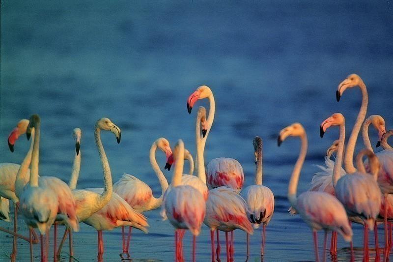 Birding In Bundala National Park, Sri Lanka