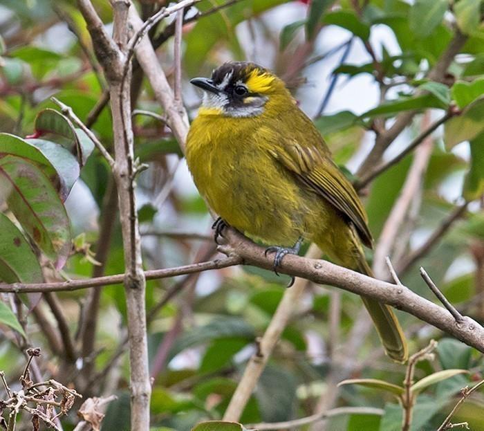 Birding In Horton Plains National Park, Sri Lanka