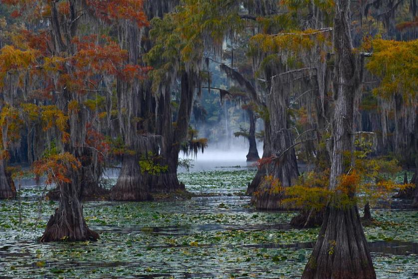 Caddo Lake Biodiversity