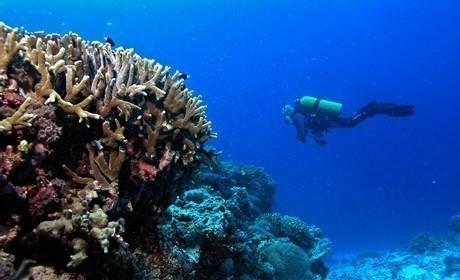 Diving in Kasantik, Cebu