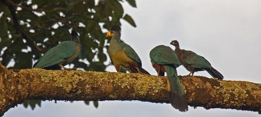 birding-in-cameroon
