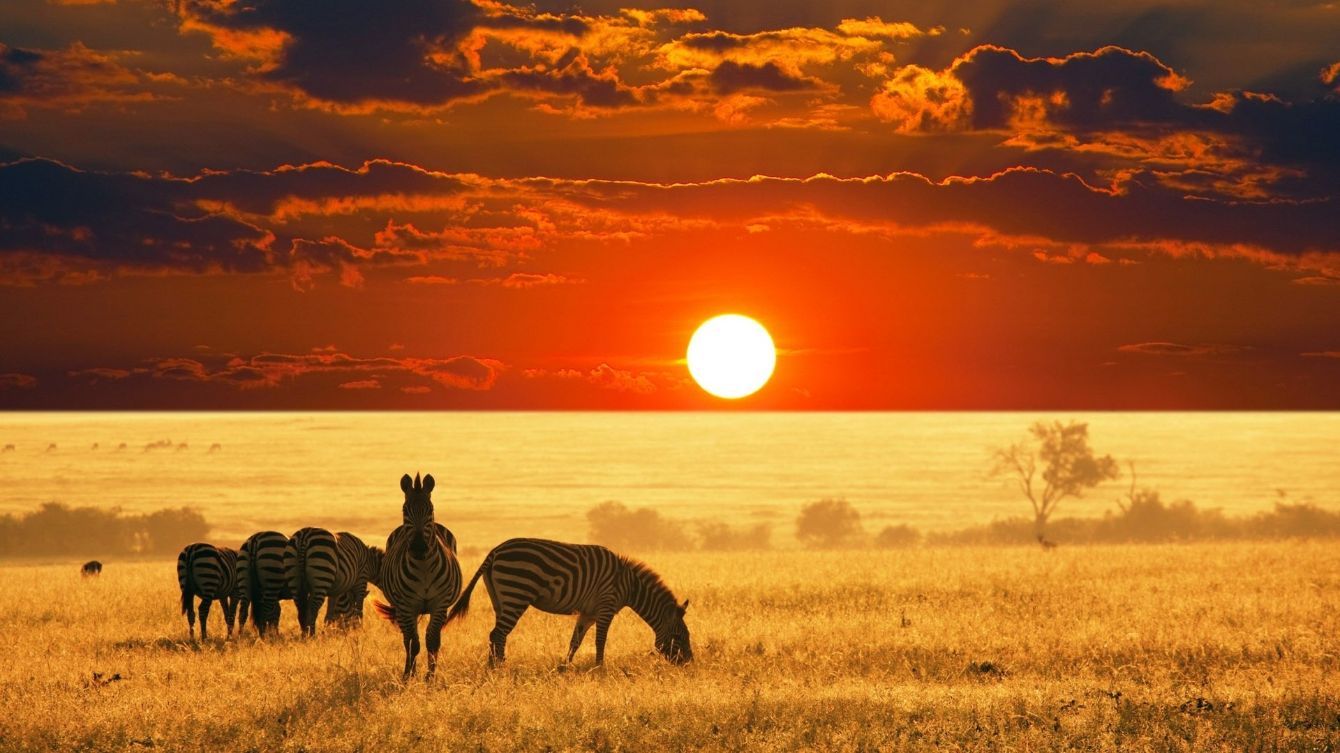 Safari Activities On The African Continent