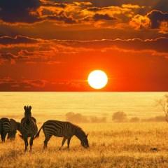 Africa's Incredible Safaris