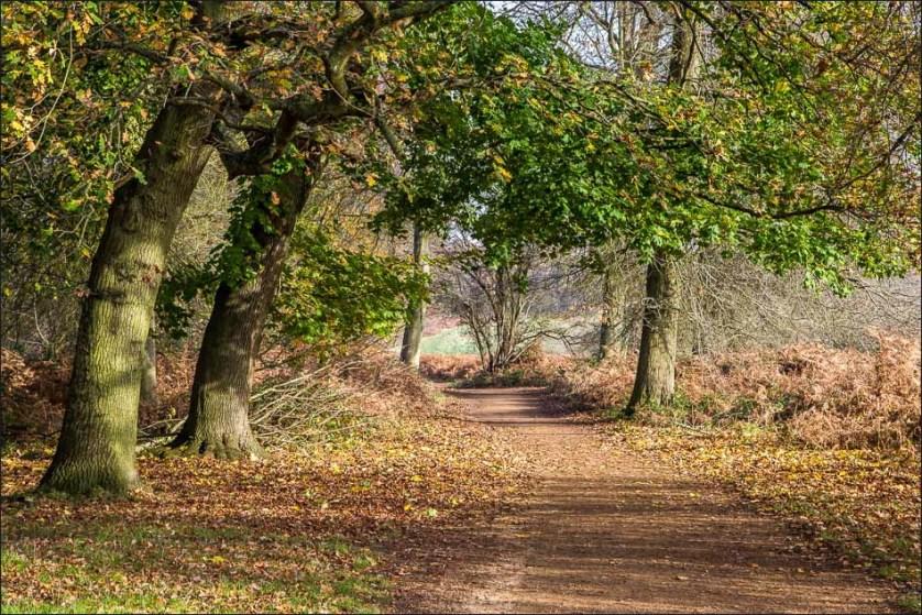 Tamsin Trail near London