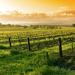 How To Prepare Your Next Wine Vacation