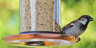 How To Feed Wild Birds When You Go Bird Watching