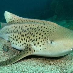 Snorkeling And Diving In Ko Lanta – Andaman Sea