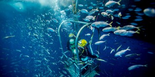Great Scuba Diving Locations To Enjoy In Key West, Florida