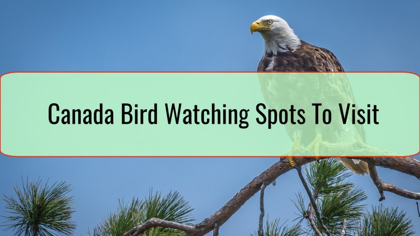 Canada Bird Watching Spots To Visit