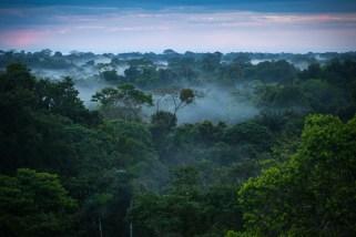 The 7 Best Amazon Wildlife Watching Locations