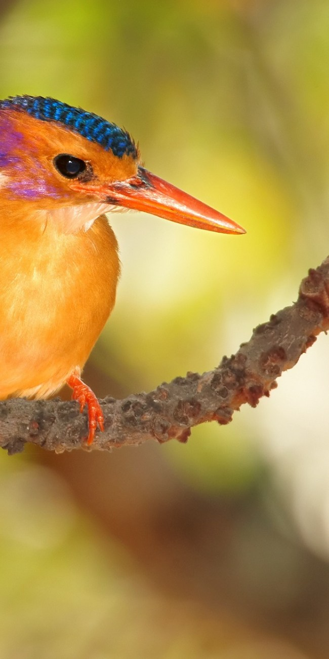 Africa's Best Bird Watching Destinations For The Eager Travelers