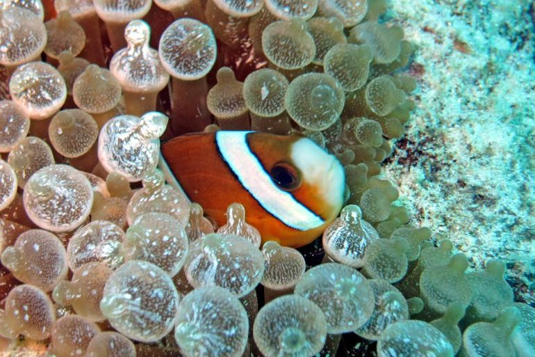 Bira Diving in South Sulawesi