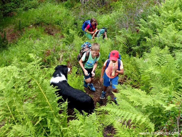 Wilde Wasser Weg hiking trail in Austria.