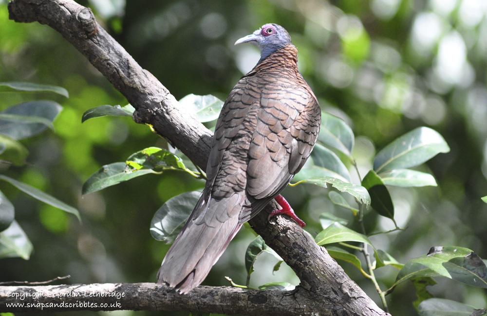 outback birdlife 2