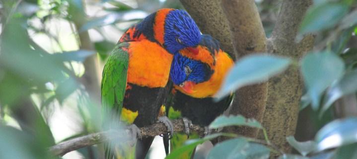 Outback birdlife
