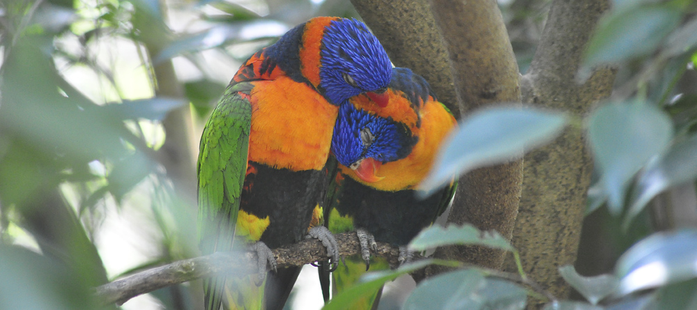 outback birdlife 10