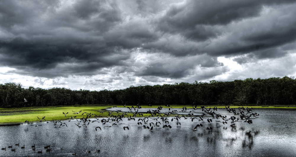 Escape from the storm. Goose Lagoon at the Territory Wildlife Park - one of my favourite shots Copyright - Create Evoke