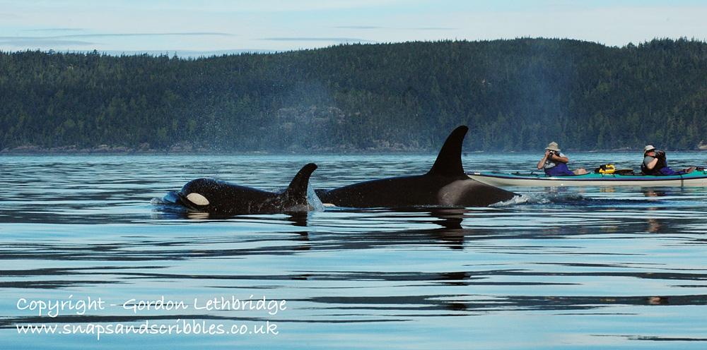 orca 03