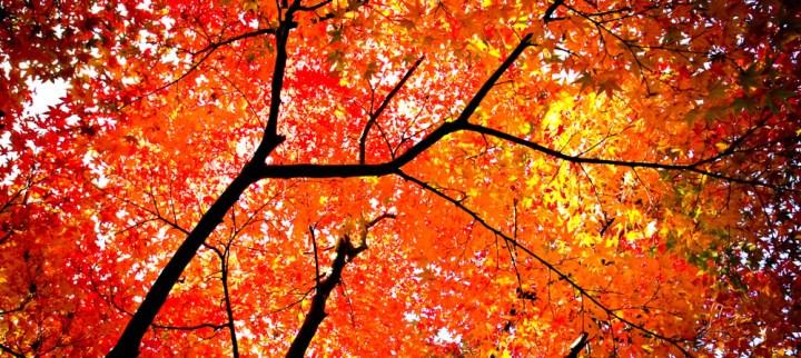 6 Hot Autumn Colour Hotspots