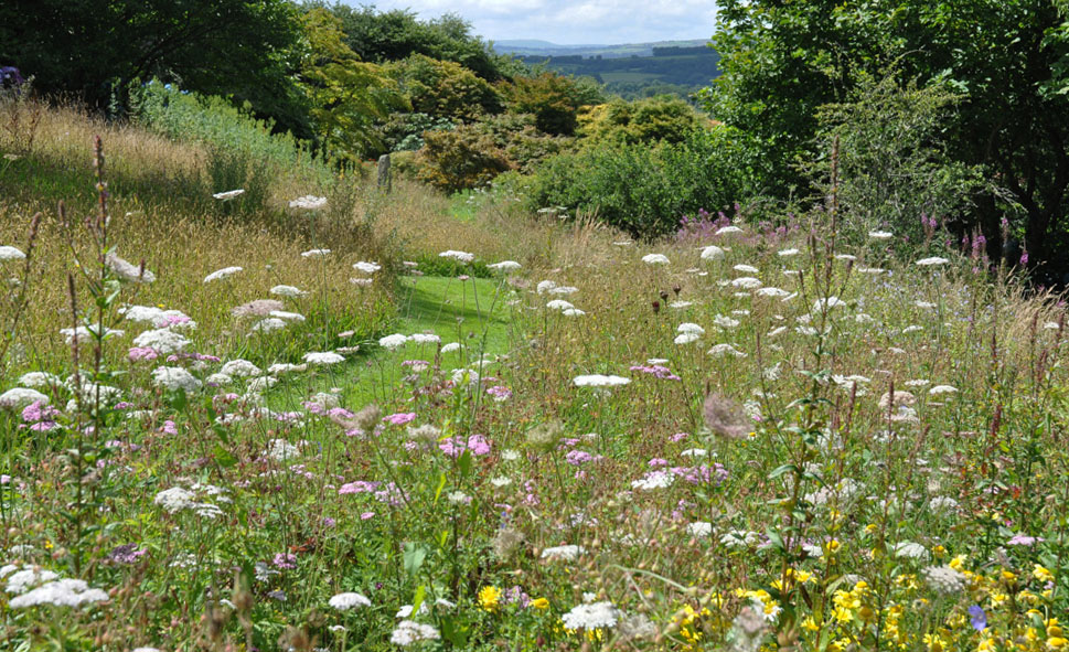 Wildflower meadow at the Garden House
