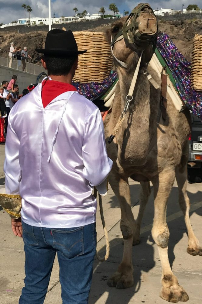Camel for one of the three kings