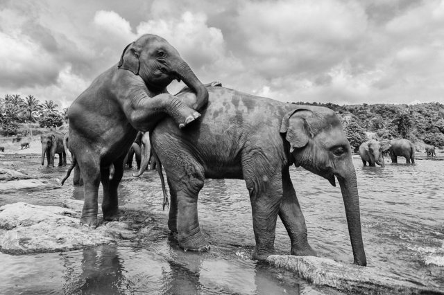 Orphaned Elephants - Yogis in my life