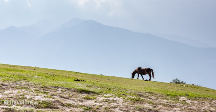 We even found a horse up there as we finished the Bijli Mahadev Trek – Kullu Attraction