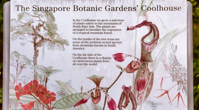 Singapore Botanic Gardens - A Forest in the City with some vicious plants
