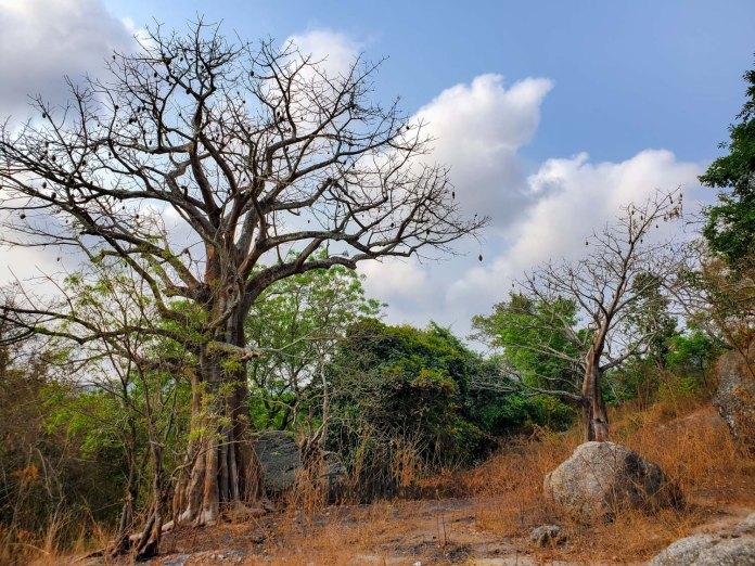 beautiful landscape in Nigeria
