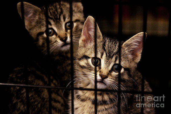 take me home - kittens behind bars