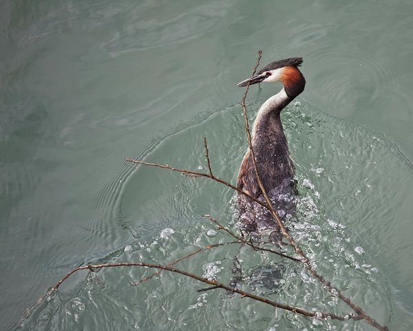 Bird water on Lake Constance, Germany