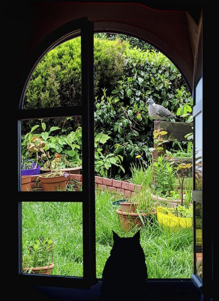 Window framing the view of a garden