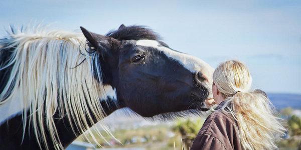 Horse pet photography in Arizona