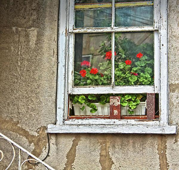 Open window with geraniums