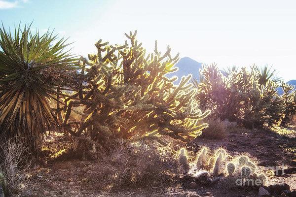 Desert morning light