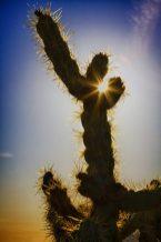 desert-star