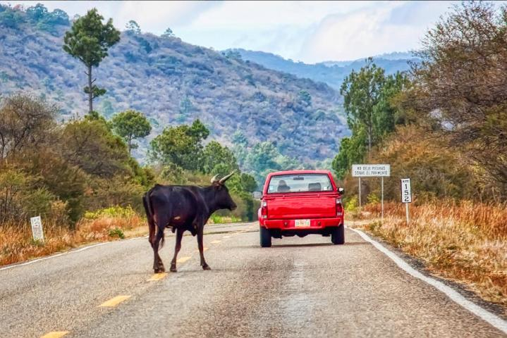 Don't Travel with a Red Car In Mexico