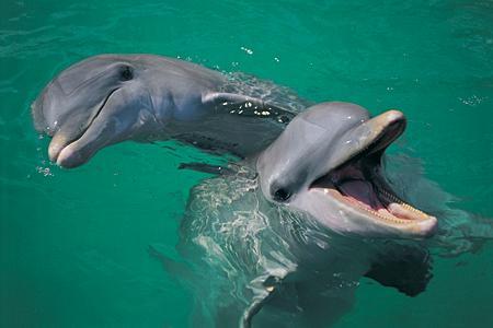 dauphins sauvages en Australie