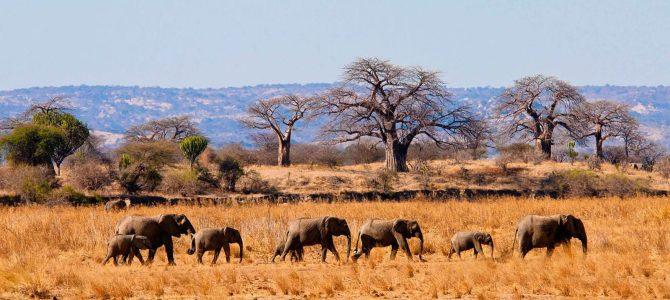 Tanzania, Travel Paradise in Africa | Cheap Flights To Tanzania