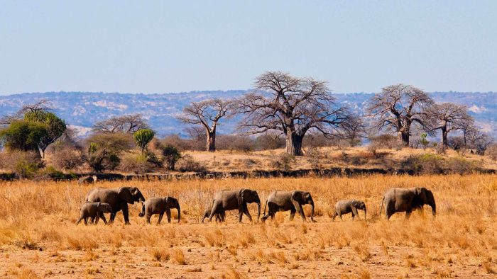 Tarangire National Park, tanzania tour, flights to tanzania, things to do in tanzania, last minute flights to tanzania